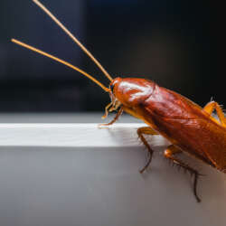 Rid-all pest control can kill cockroaches