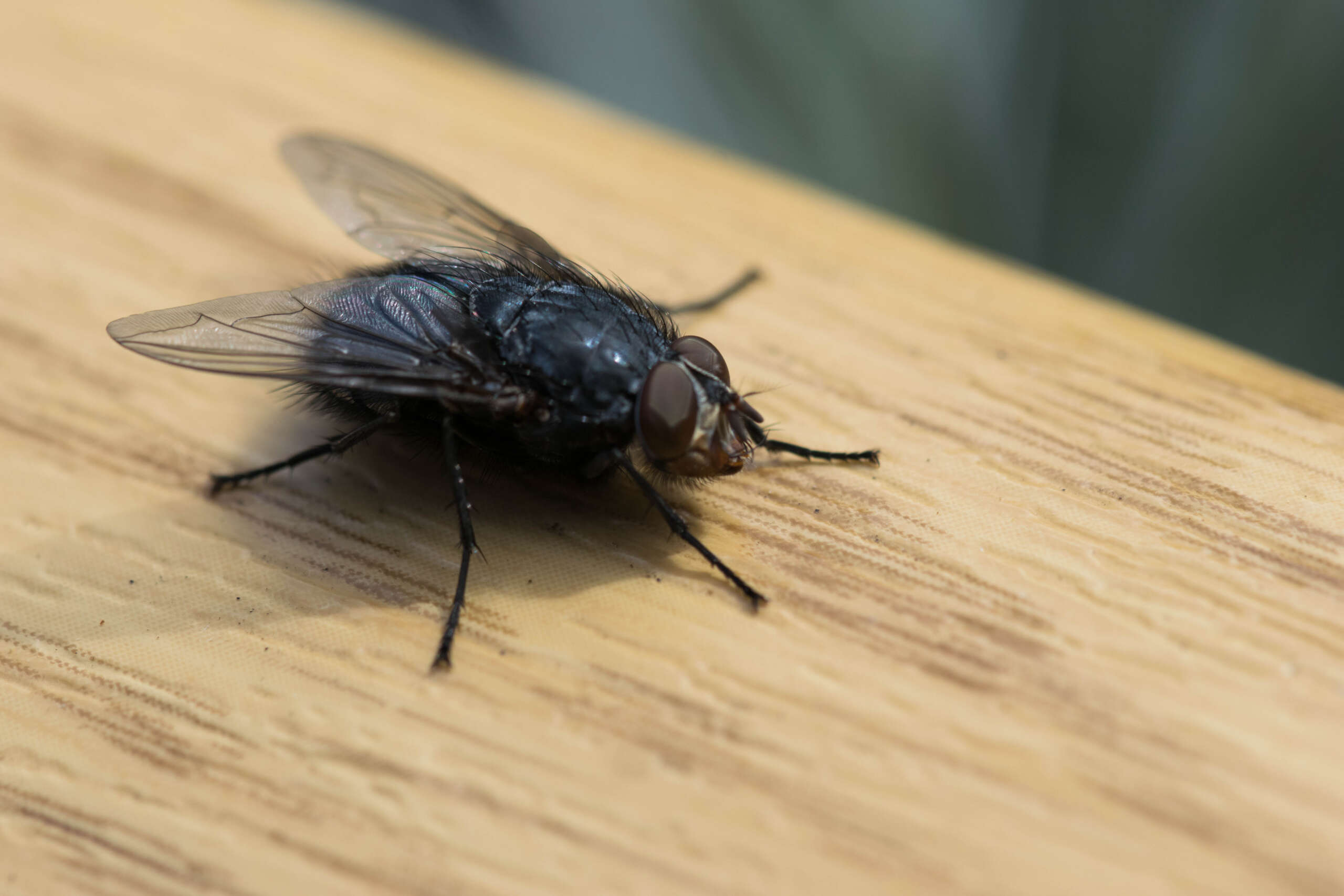 let rid-all help solve your flies problem